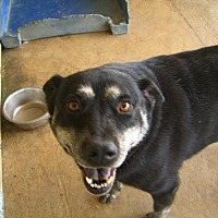 Adopt A Pet :: Lucy - Nashville, GA