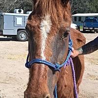 Adopt A Pet :: Sarabi - Hitchcock, TX