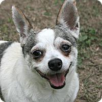 Adopt A Pet :: Betty - Lufkin, TX