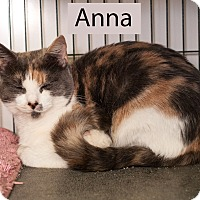 Adopt A Pet :: Anna - Shelton, WA