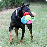 Adopt A Pet :: SLATER - Greensboro, NC