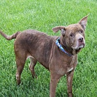 Adopt A Pet :: PRINCESS - Decatur, IL