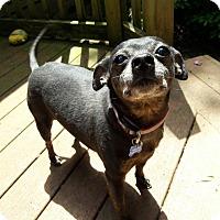 Adopt A Pet :: Pete - Salem, OR