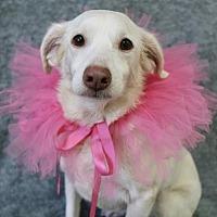 Adopt A Pet :: Sophia - Picayune, MS