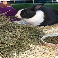 Adopt A Pet :: A776000 - Toronto, ON