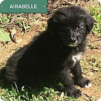 Adopt A Pet :: **AIRABELLE** meet July 8th! - Mukwonago, WI