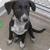 Adopt A Pet :: Kassy & Sassy - Holton, KS