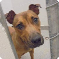 Adopt A Pet :: Princess - Lonely Heart - Gulfport, MS