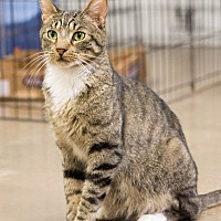 Adopt A Pet :: Joe - Montclair, CA