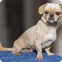 Adopt A Pet :: Bo - Oakdale, TN
