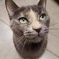 Adopt A Pet :: Chevy - Edmond, OK