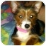Photo 1 - Fox Terrier (Toy)/Yorkie, Yorkshire Terrier Mix Puppy for adoption in North Benton, Ohio - Pookie (pending)