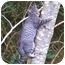 Photo 1 - Domestic Shorthair Cat for adoption in Tillamook, Oregon - Montessa