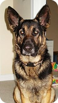 German Shepherd Dog Mix Dog for adoption in Kalamazoo, Michigan - Rowden