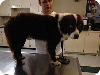 Border Collie Mix Dog for adoption in Daisy, Georgia - Jack