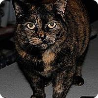 Adopt A Pet :: Chloe - Sanford, ME