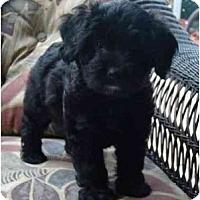 Adopt A Pet :: Jabulie - Tallahassee, FL