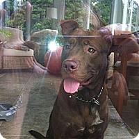 Adopt A Pet :: Chester - Clarksburg, MD