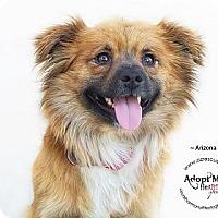 Adopt A Pet :: Arizona - Phoenix, AZ