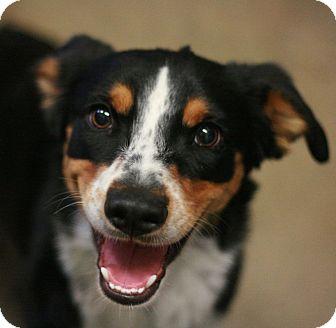 Australian Cattle Dog Mix Dog for adoption in Canoga Park, California - Emma