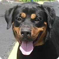 Adopt A Pet :: Fuji - Pembroke Pines, FL