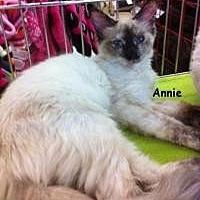 Adopt A Pet :: Annie M - Sacramento, CA