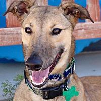 Adopt A Pet :: Zelda (ZeeZee) - Tucson, AZ