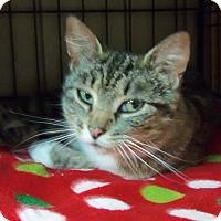 Adopt A Pet :: RAYLYNN ROSE - Medford, WI