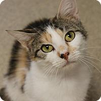 Adopt A Pet :: Cali - Naperville, IL