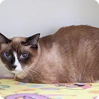 Domestic Shorthair Cat for adoption in Boise, Idaho - Janie