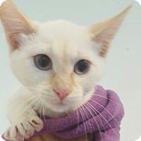 Adopt A Pet :: Trinity - Hawk Point, MO