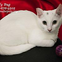 Adopt A Pet :: Adopt: LADY BUG - Monrovia, CA