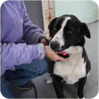 Border Collie/Spaniel (Unknown Type) Mix Dog for adoption in Washington, North Carolina - Queenie