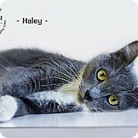 Adopt A Pet :: Haley - Phoenix, AZ