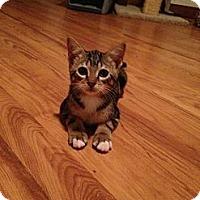 Adopt A Pet :: Kogo - Lauderhill, FL