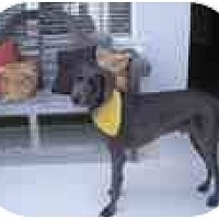 Adopt A Pet :: Shadow - Eustis, FL