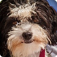 Adopt A Pet :: Jackie - Adopted - Warwick, NY