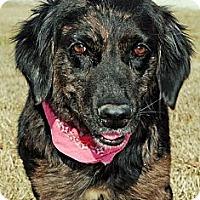 Adopt A Pet :: Pam - Gonzales, TX