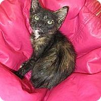 Adopt A Pet :: Ziva - Mobile, AL