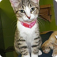 Adopt A Pet :: Wendy - Dover, OH