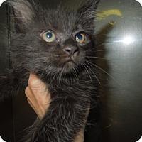Adopt A Pet :: Ben - Medina, OH