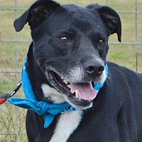 Adopt A Pet :: TOBY KEITH - Liverpool, TX