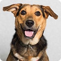 Adopt A Pet :: Madison - Minneapolis, MN