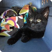 Adopt A Pet :: Diamond - Plattekill, NY
