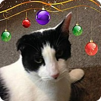 Adopt A Pet :: BRUNO - BigLoverboy - Rochester, NY