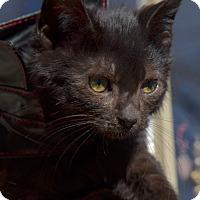 Adopt A Pet :: Jasper Bond - Brooklyn, NY
