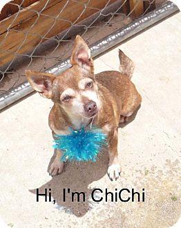 Chihuahua Dog for adoption in Tehachapi, California - ChiChi