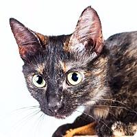Adopt A Pet :: Willow - Cincinnati, OH