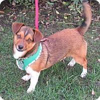 Adopt A Pet :: Jeffrey - Sonoma, CA