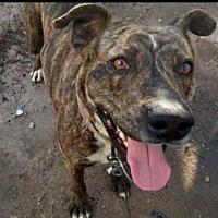 Adopt A Pet :: Billy - Dana Point, CA